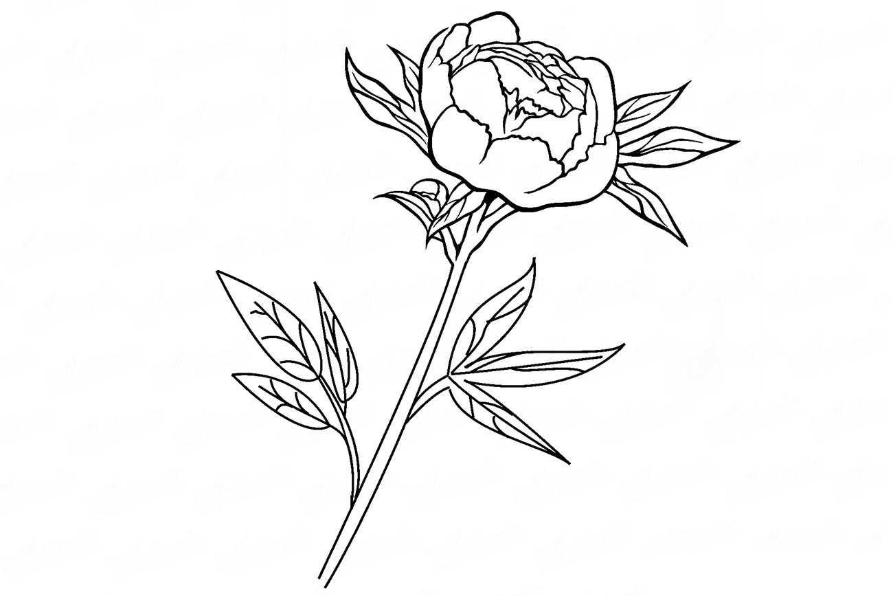 Цветы для срисовки: советы по выбору идей и обзор лучших рисунков для начинающих (125 фото примеров)