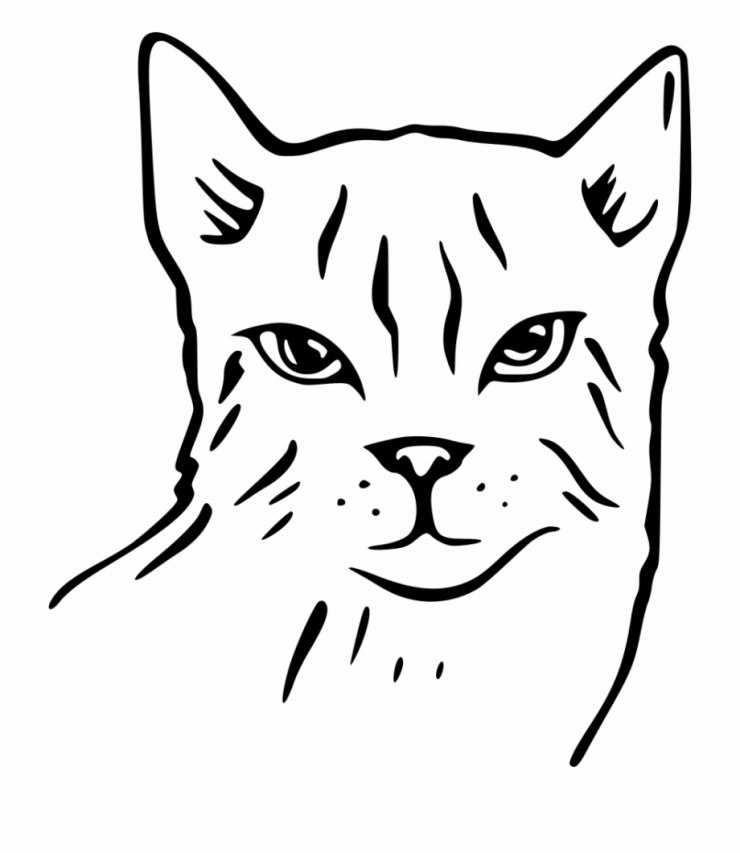 Картинки котов для срисовки: ТОП-200 лучших изображений для красивой и забавной срисовки