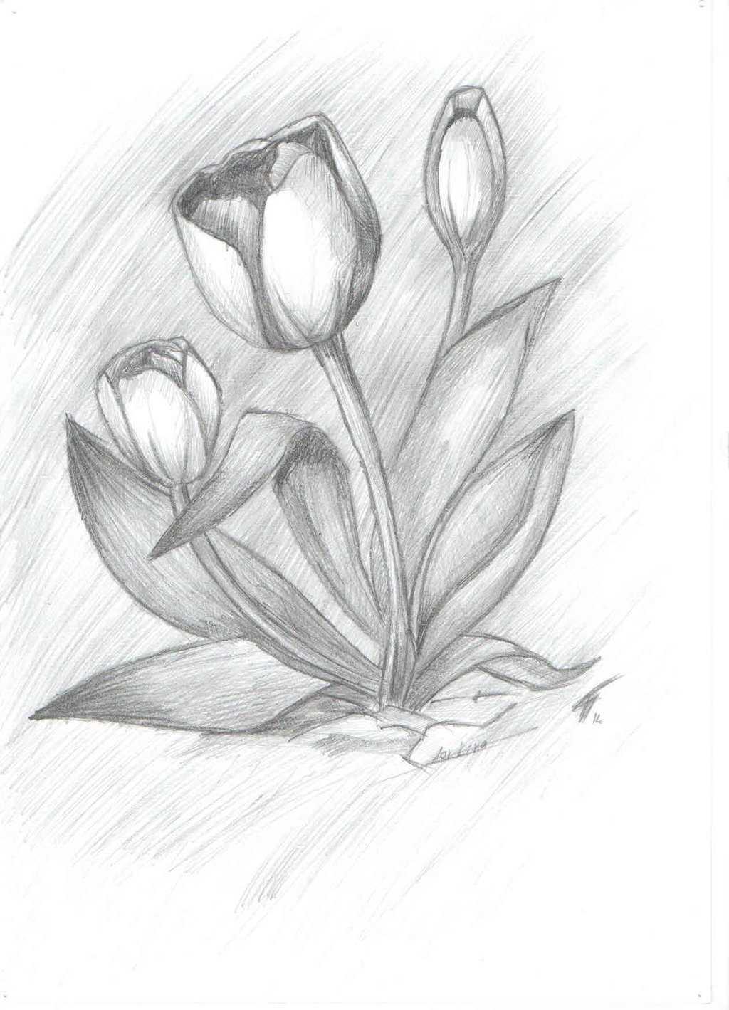 Картинки простым карандашом для срисовки мастер класс