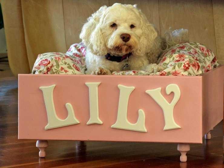 Лежанка для собаки своими руками - варианты выкройки и способы создания удобной лежанки для собаки (110 фото)