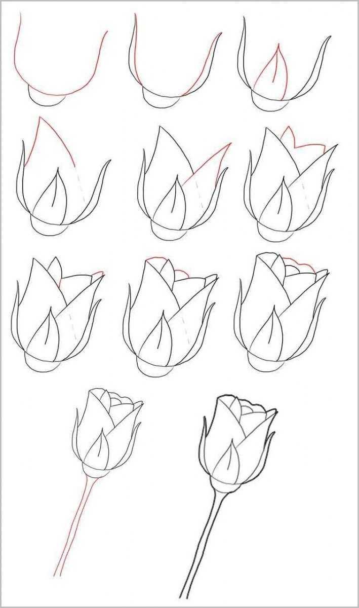 Срисовки для начинающих: способы, инструкции, лучшие идеи и советы экспертов (110 фото + видео)