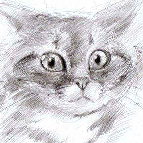 Срисовки простым карандашом — техника рисования, уроки и советы для начинающих от мастеров (135 фото)