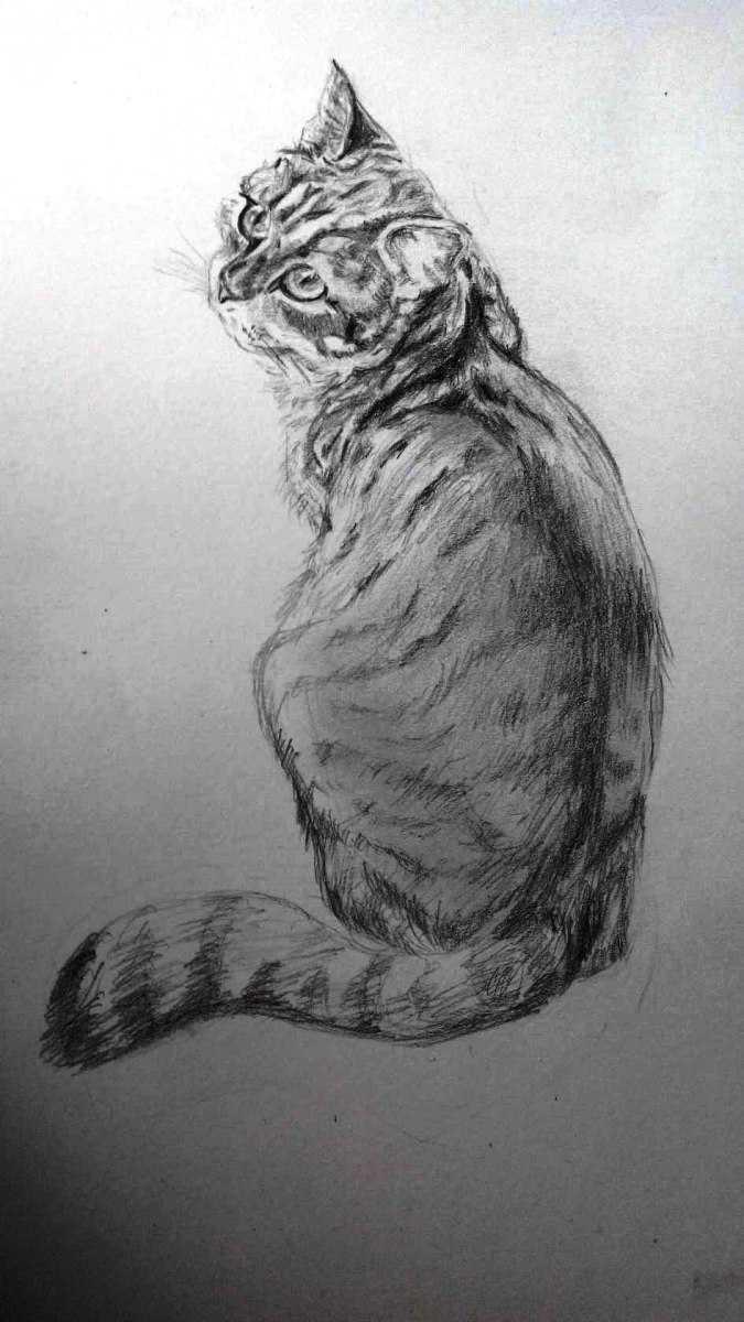 Срисовки простым карандашом - техника рисования, уроки и советы для начинающих от мастеров (135 фото)